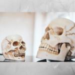 , El cráneo y el dimorfismo sexual